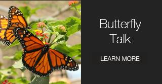 butterfly-talk