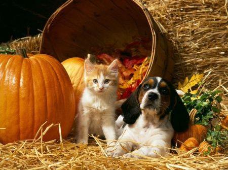 Chicago Pet Rescue Fundraiser