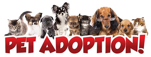 Pet Adoption Event with Chicago Pet Rescue